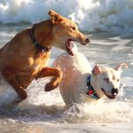 chiens jeux