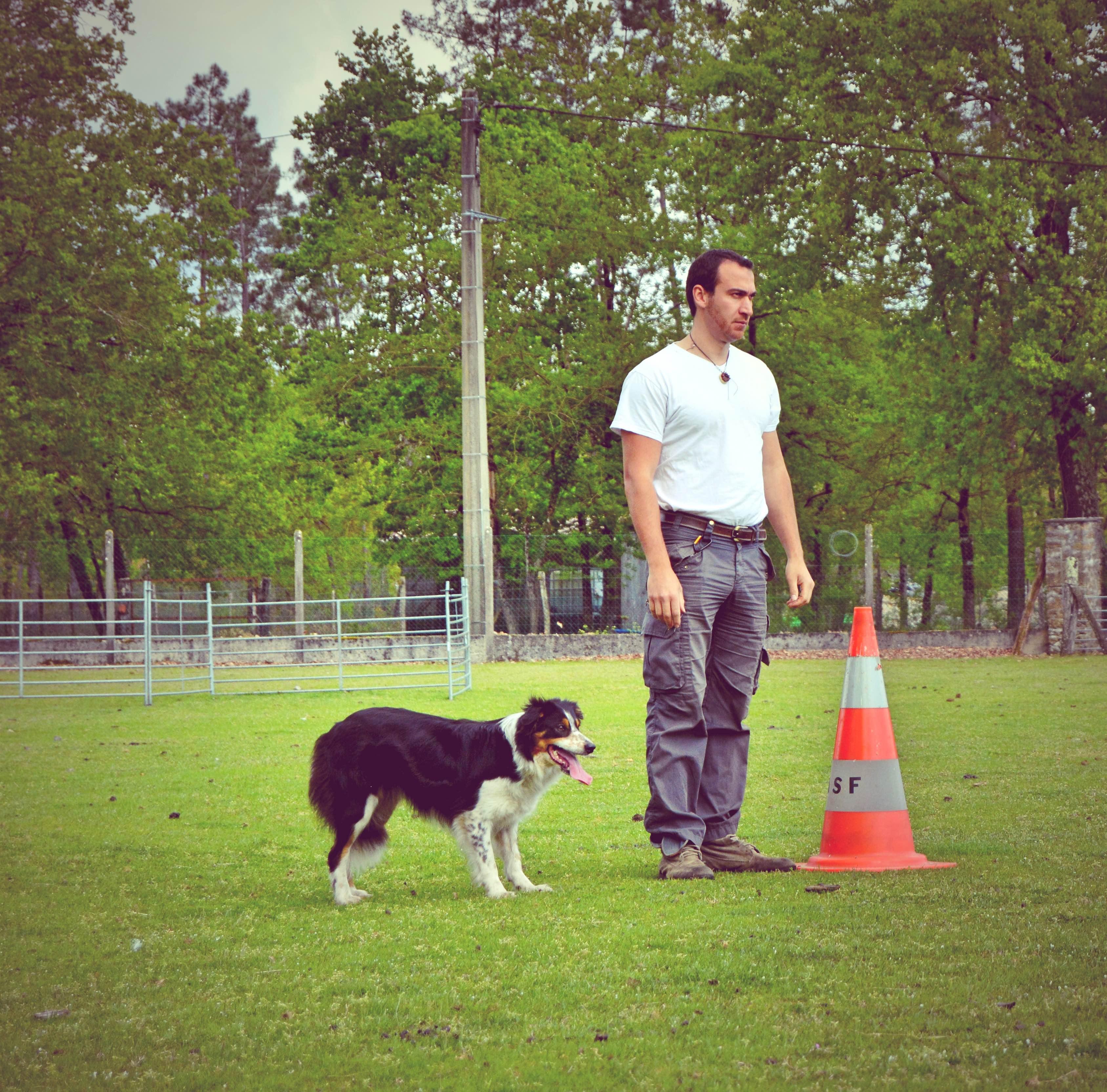 dressage chien de troupeau - Valeurs Canines