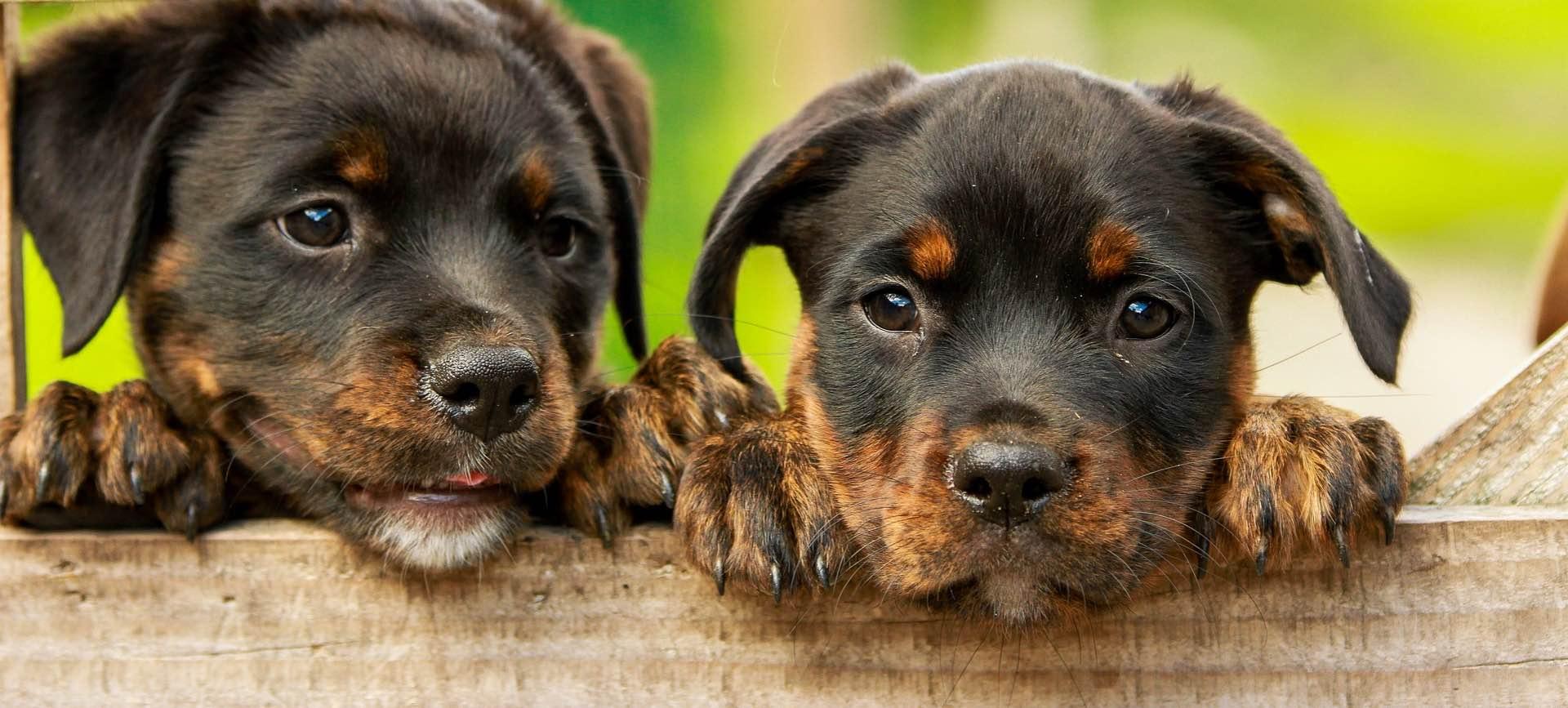 ecole-du-chiot-dressage-canin